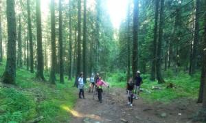 Prima parte a traseului: prin pădurea de molid