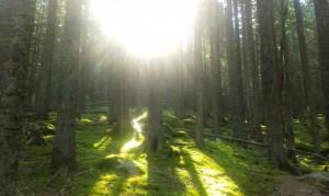 Raze de soare încălzind pădurea
